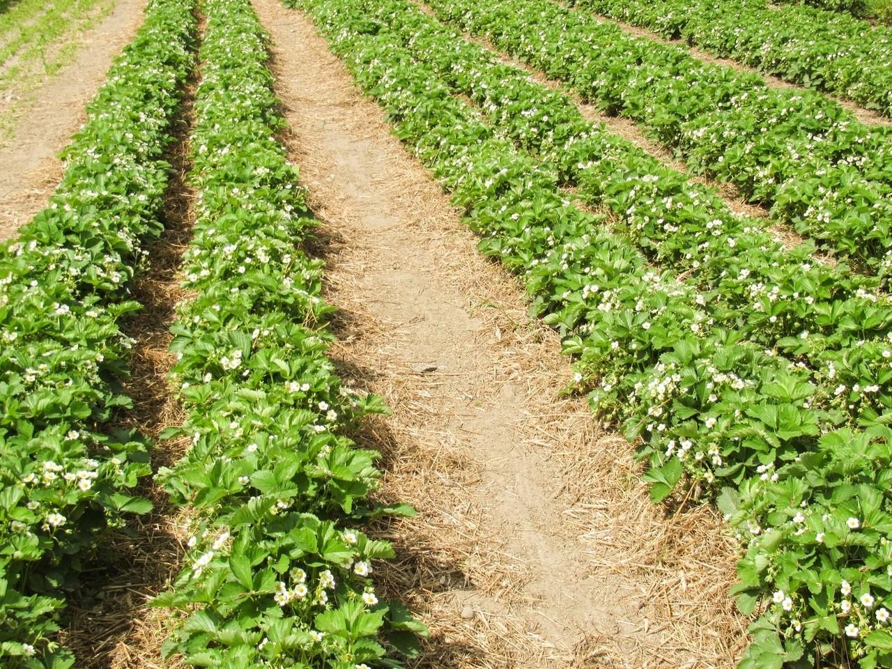 Współczesne czynniki zwiększające potencjał działalności rolniczej